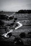 Vingård i Provence Arkivbilder