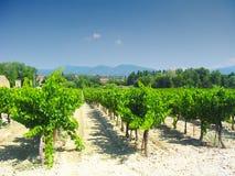 Vingård i Provence, Frankrike Under sommar 2004 arkivfoton