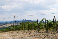 Vingård i Tuscan bygd Royaltyfri Fotografi
