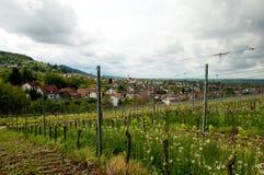 Vingård i Tyskland, Baden Arkivfoto