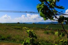 Vingård i Virginia med druvor och bergplats Royaltyfria Foton