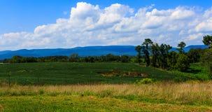 Vingård i Virginia med druvor och bergplats Royaltyfri Bild