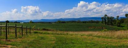 Vingård i Virginia med druvor och bergplats Arkivfoton