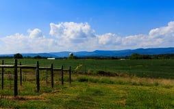 Vingård i Virginia med druvor och bergplats Arkivbild