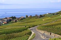 Vingård längs sjön, Schweiz Royaltyfria Bilder