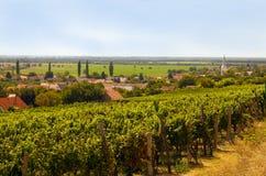 Vingård Landskap av Sydeuropa med den lilla byn, chur arkivfoto