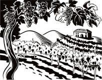 Vingård med grupper av mogna druvor stock illustrationer
