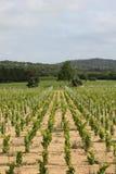 Vingård nära Ramatuelle, Provence Royaltyfria Foton