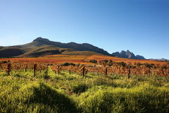 Vingård och berg Arkivfoton