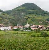 Vingård och stad i Italien arkivbild