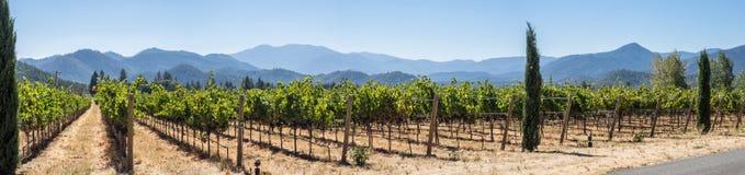 Vingård och vinodling i landsbygd royaltyfri fotografi