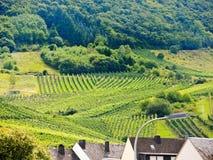 Vingård på gröna kullar i den Moselle regionen Royaltyfri Fotografi