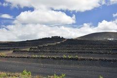 Vingård på kullen av ön av Lanzarote Royaltyfria Bilder