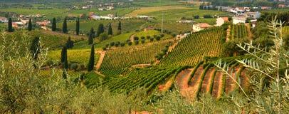 Vingård på pesoen da Regua i Alto Douro Wine Region, Portugal arkivfoto