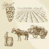Vingård skörd, lantgård royaltyfri illustrationer