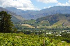 Vingård - Stellenbosch - Sydafrika fotografering för bildbyråer