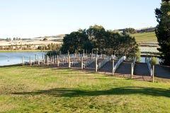 Vingård Tasmanien royaltyfri bild