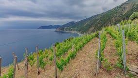 Vingård vid kusten nära Manarola, Cinque Terre, Italien arkivbilder