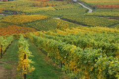 vingårdar fotografering för bildbyråer