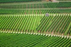 vingårdar Royaltyfri Bild