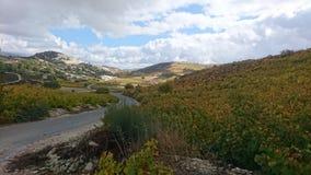 Vingårdar av Cypern Royaltyfri Foto