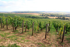 Vingårdar av den Chablis Bourgogne, Frankrike Royaltyfri Foto