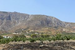 Vingårdar av lantliga Exo Gonia på ön av Santorini Grekland Arkivbild