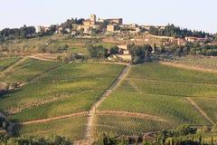 Vingårdar av Radda i Chianti, Tuscany, Italien royaltyfria foton