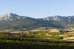 Vingårdar av Rioja arkivfoton