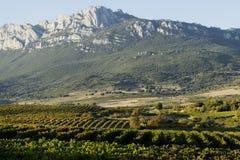 Vingårdar av Rioja royaltyfria foton