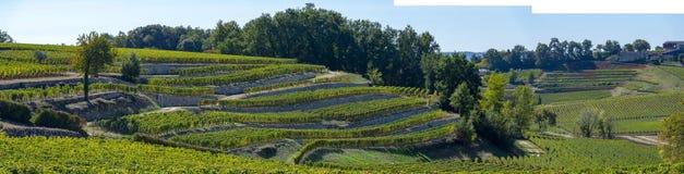 Vingårdar av Saint Emilion, Bordeaux vingårdar, terrasserad vingård arkivfoton