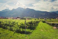 Vingårdar av Trento royaltyfri foto