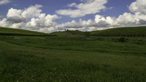 Vingårdar Daruvar, Kroatien Arkivfoton