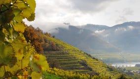 vingårdar för 1 inga spitz Arkivfoton
