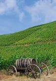 vingårdar för ahrgermany dal royaltyfria foton