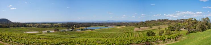 vingårdar för dal för Australien jägarepanorama Arkivfoto