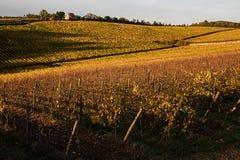Vingårdar höst, solsken för Chianti` s Royaltyfri Bild
