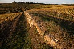 Vingårdar höst, solsken för Chianti` s Royaltyfri Foto