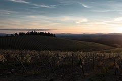 Vingårdar höst, solsken för Chianti` s nära till natten Royaltyfria Foton