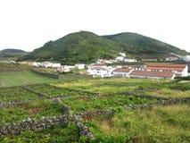 Vingårdar i byn Santa Cruz da Graciosa, Azores, Portugal Arkivfoto