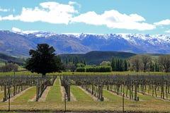 Vingårdar i centrala Otago royaltyfri fotografi