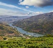 Vingårdar i den Douro dalen Arkivbilder