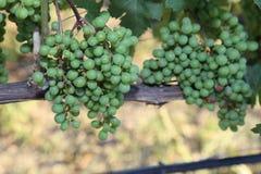 Vingårdar i Europa! Nära övre affischtavla för vingård fotografering för bildbyråer