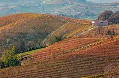 Vingårdar i höst i Piedmont, Italien Arkivbild