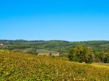 Vingårdar i kullarna av Tuscany fotografering för bildbyråer