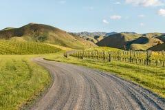 Vingårdar i Marlborough, Nya Zeeland i vår Royaltyfri Fotografi