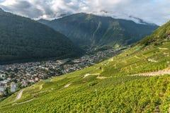 Vingårdar i Martigny i kantonen av Valais, Schweiz royaltyfri foto