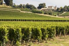 Vingårdar i Saint Emilion, Frankrike royaltyfria foton