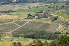 Vingårdar i Tuscany royaltyfri fotografi