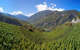 Vingårdar i Visperterminen, Schweiz - högst vingårdar i Europa Fotografering för Bildbyråer